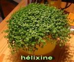 Helixine01