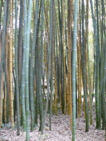 Bambouseraie_02