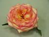 Rose_03_1